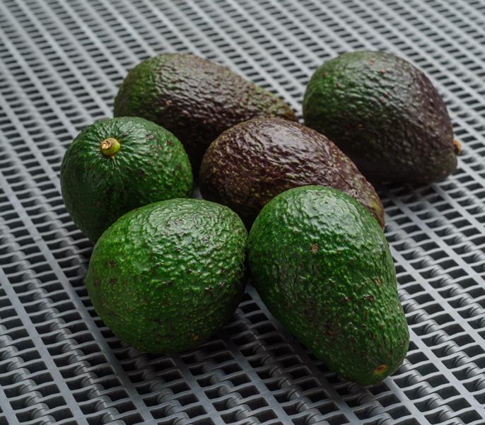 Avocados wholesale produce in Memphis